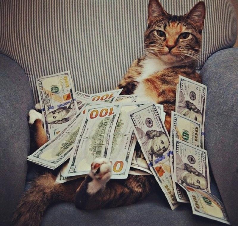 котики и деньги картинки