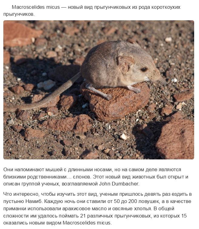 Представители животного мира, открытые в прошлом году (15 фото)