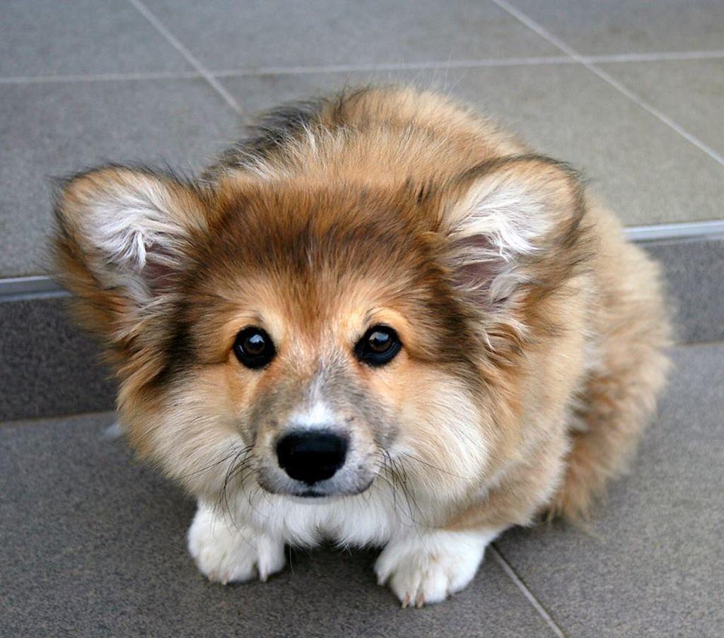 умеет хорошо фото собак разных пород щенки разделе соответствующим названием