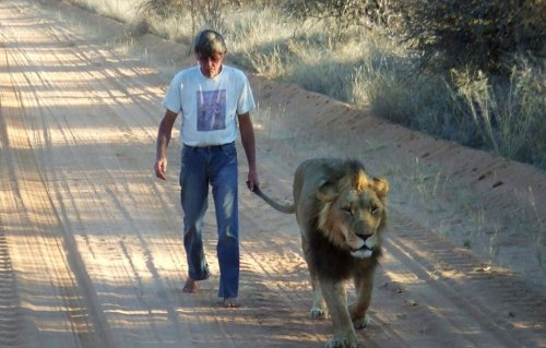 Дружба между львом и человеком, который его спас (9 фото + видео)
