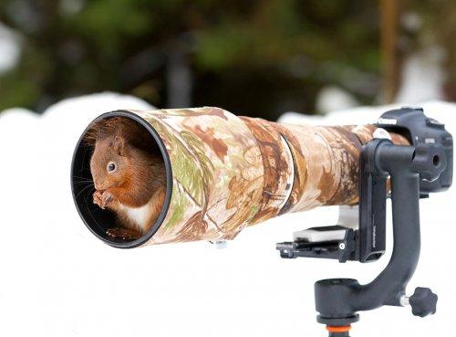 Животные, увлекающиеся фотографией (28 фото)