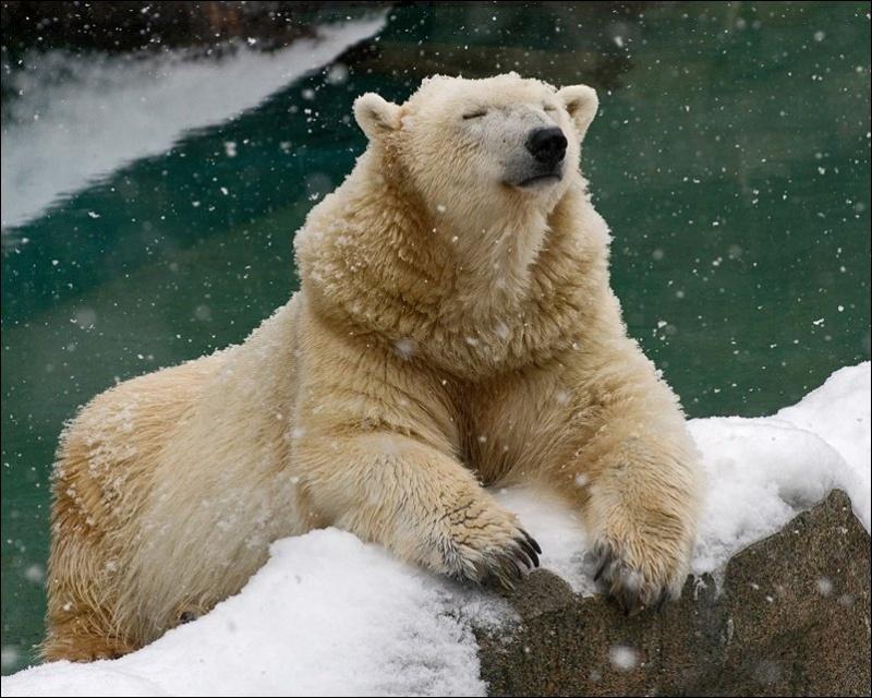 Покойным орел, картинки с белым медведем прикольные