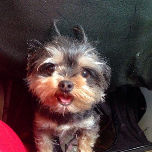 Подборка фотографий смешных и забавных собак (48 фото)