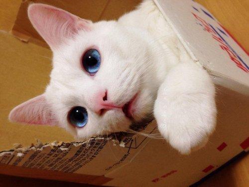 Очаровательный котик Сэцу-чан (14 фото)