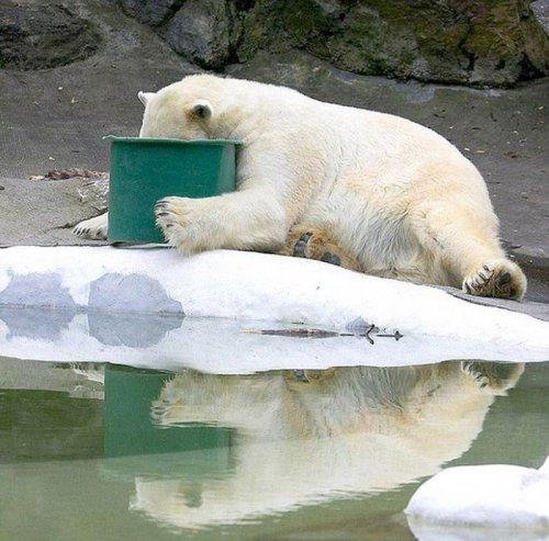Животные после праздников (15 фото)