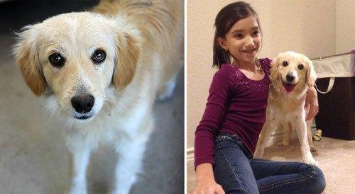 Собаки из приюта: до и после обретения семьи (13 фото)