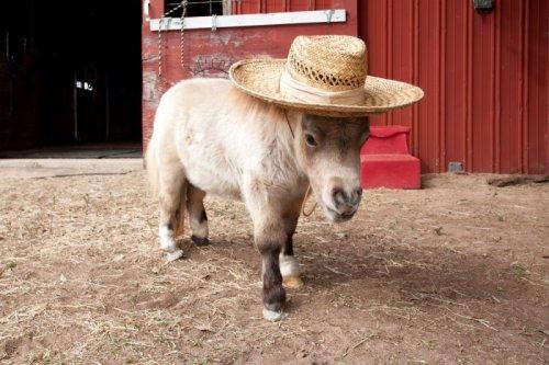 Миниатюрная лошадка-звезда интернета (14 фото)