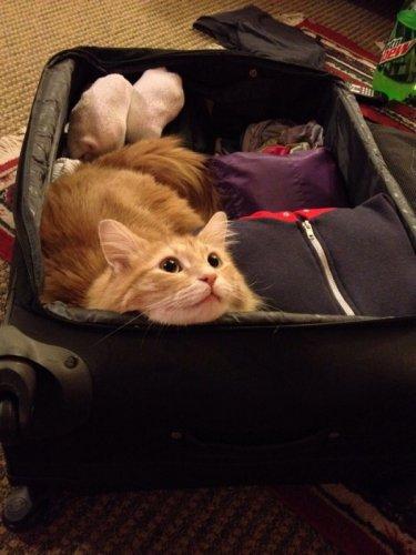 К путешествию готовы! (17 фото)