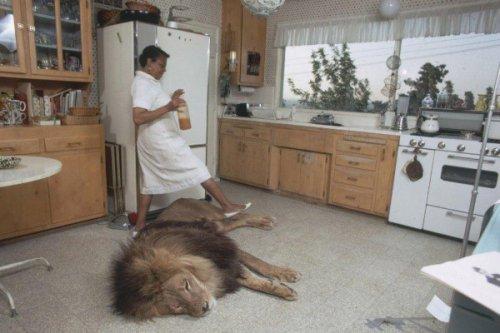 Жизнь со львом (9 фото)