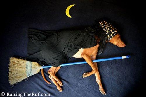 Мой пёс большой соня (10 фото)