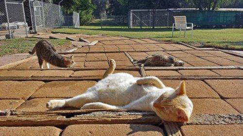Святилище котов в Калифорнии (13 фото)