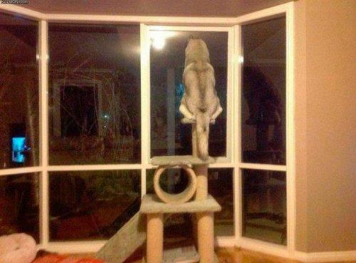 Собаки,считающие себя кошками (22 фото)