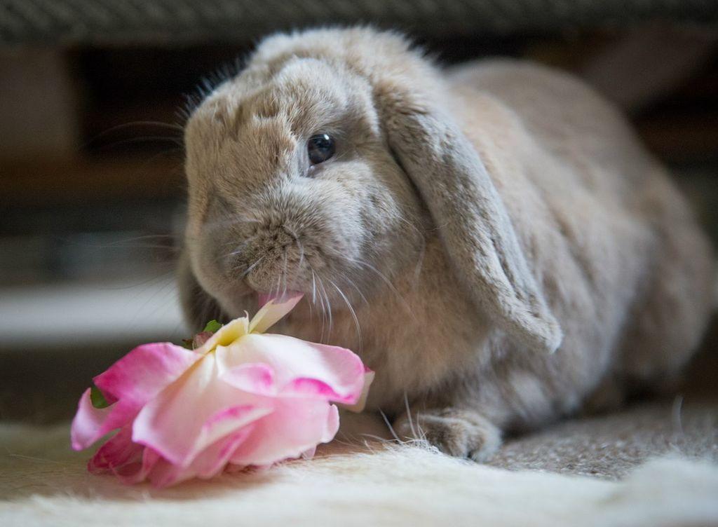 милые кролики фото поделились кадрами, которых