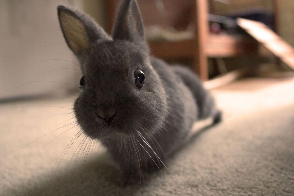 Фото забавных кроликов