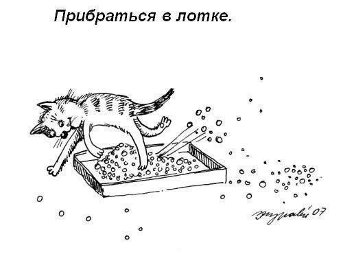 Юмор : Правила кошачьего этикета