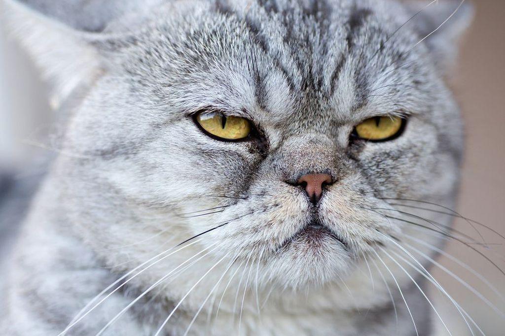 Злой кот прикольная картинка, пьяные приколы