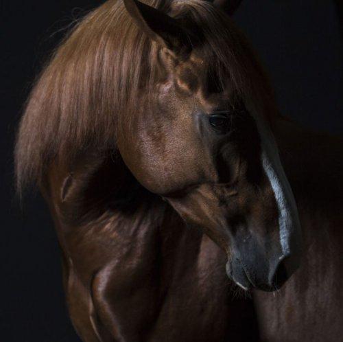 Портреты животных крупным планом (16 фото)