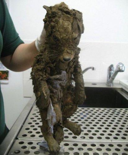 Спасение лисёнка (3 фото)