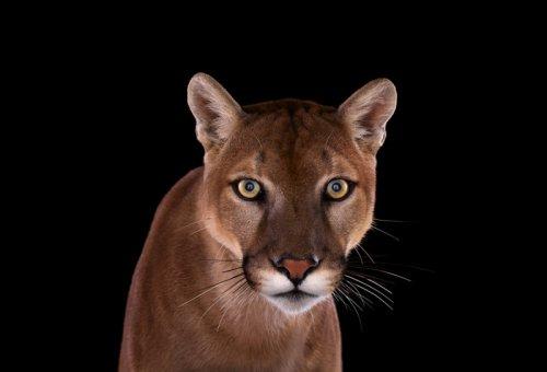 Портреты диких животных от Брэда Уилсона (35 фото)