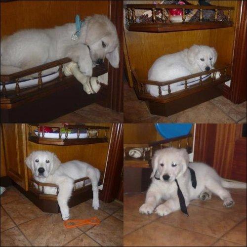 Собаки,которые отдыхают в самых неожиданных местах (32 фото)