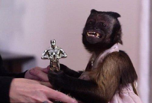 20-летняя обезьянка получила «Оскар» для животных (11 фото)