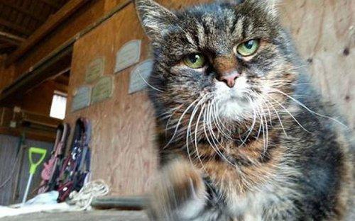 Самая старая кошка в мире живёт в Швеции, ей 29 лет