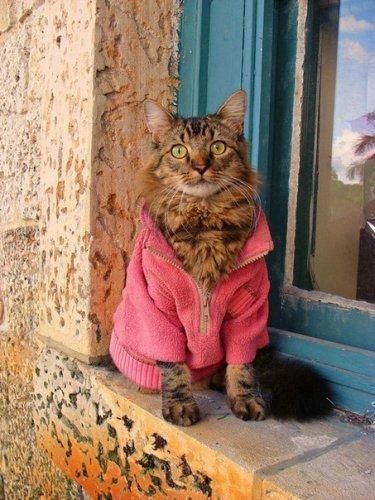 Гламурные котики (10 фото)
