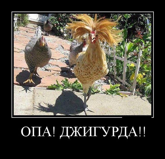 смешные картинки с курицей и с надписью материале перечислены самые