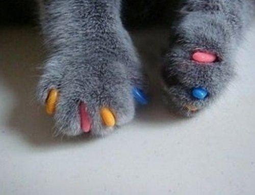 Кошки с разноцветными когтями (10 фото)