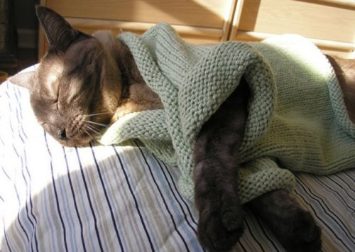 Кошки в тёплой одёжке (18 фото)