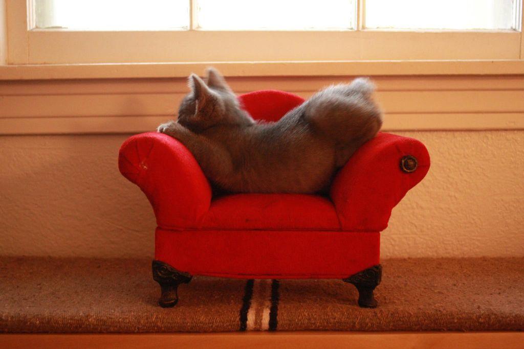 Прикольная картинка дивана