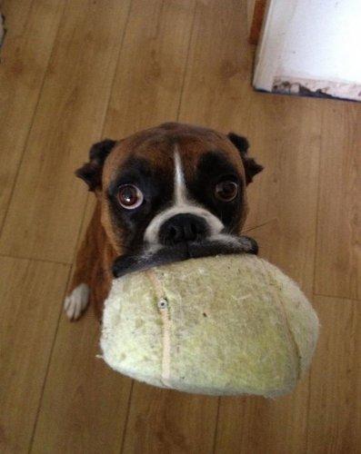 Смешные и забавные собаки (36 фото)