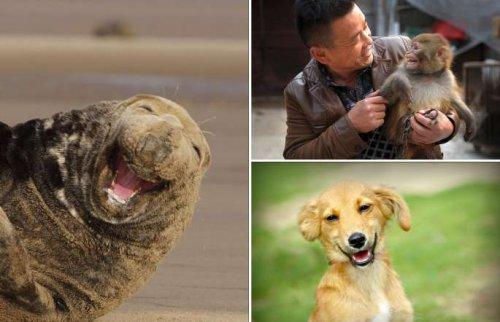 Счастливые животные (23 фото)
