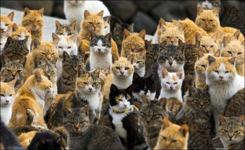 Кот здесь власть (24 фото)