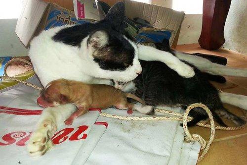 Кошка стала приёмной матерью для новорожденного щенка