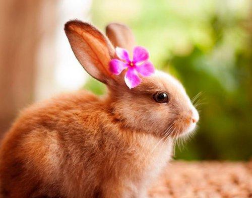 Милые кролики (18 фото)
