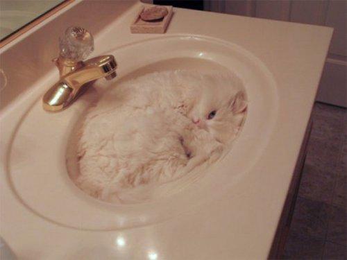 Маскировка по-кошачьи (14 фото)