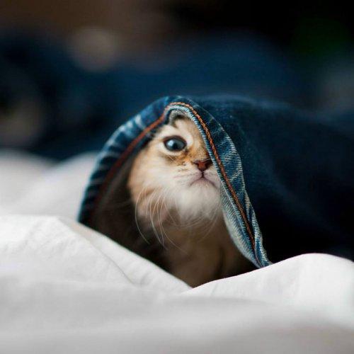 Смешные и забавные кошки (37 фото)