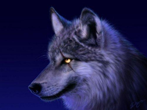 Христианская притча: Верующий волк