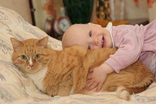 Смешные и забавные кошки (45 фото)