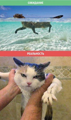 Юмор : Коты: ожидания и реальность (8 фото)