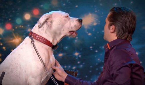 Юмор : Собака поет песню Уитни Хьюстон