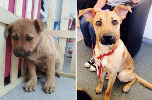 Животные до и после того, как их забрали из приюта (15 фото)
