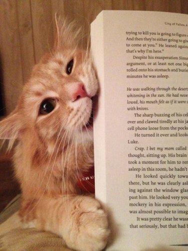 Коты, которые не дают читать (31 фото)