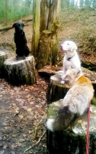 Очаровательный домашний лисёнок (7 фото)