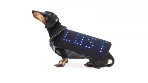 LED-плащ поможет собаке вернуться к хозяину