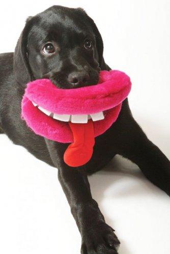 Забавные собаки со своими любимыми игрушками (28 фото)
