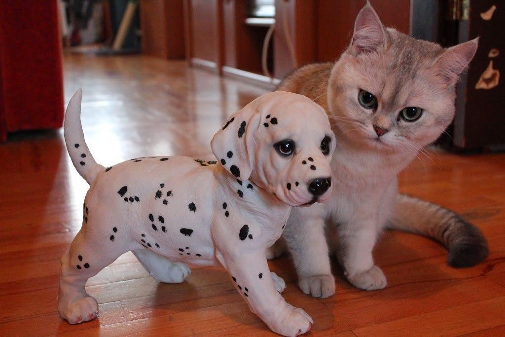 породистые коты и собаки картинки