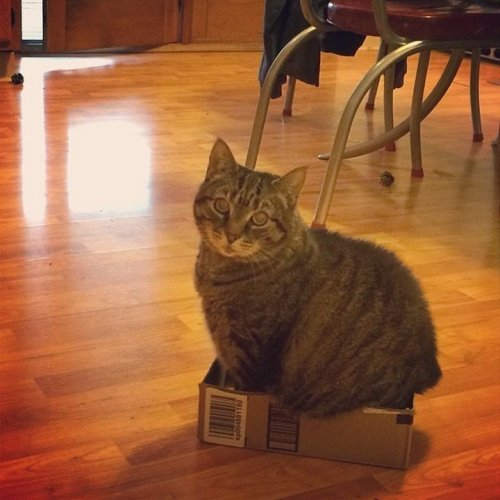Кошки, которые умеют помещаться во всё (12 фото)