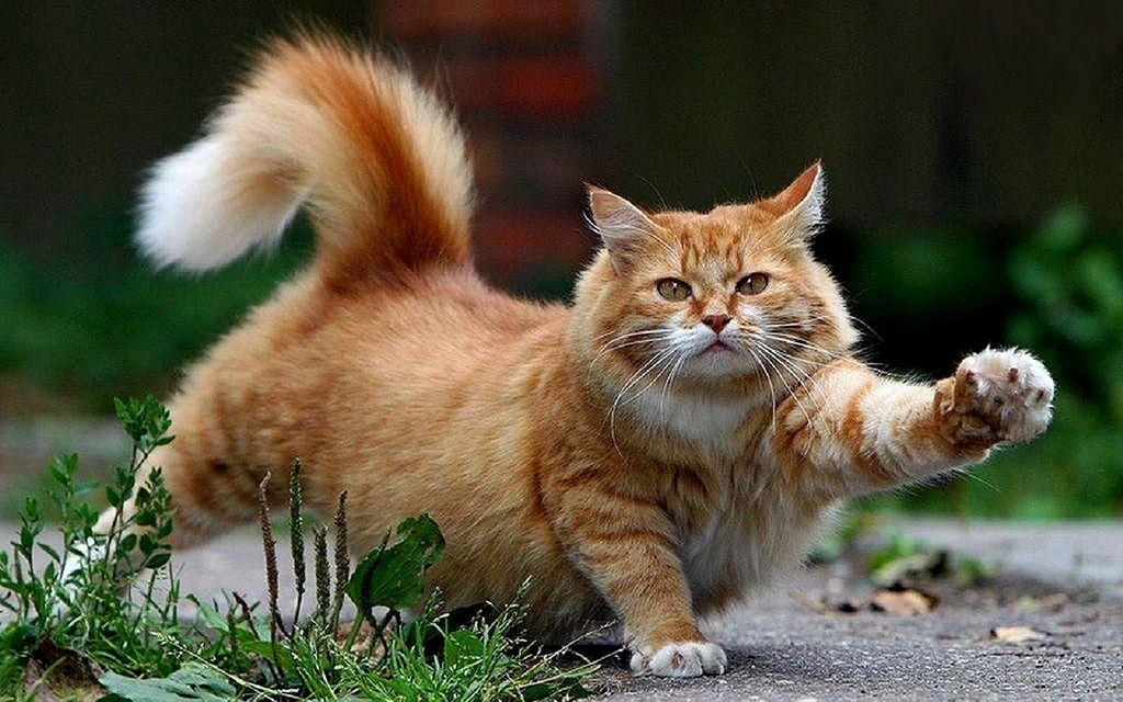 лучшие прикольные картинки с котами несчастью